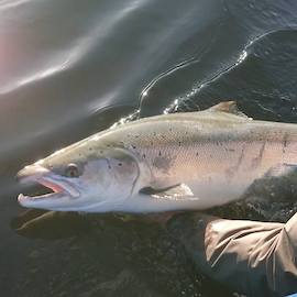 298756c7889 26lb fish caught Monday on Meikleour Fishing by Dario Ferrari.
